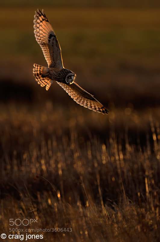 Photograph Hunting Owl by Craig Jones on 500px