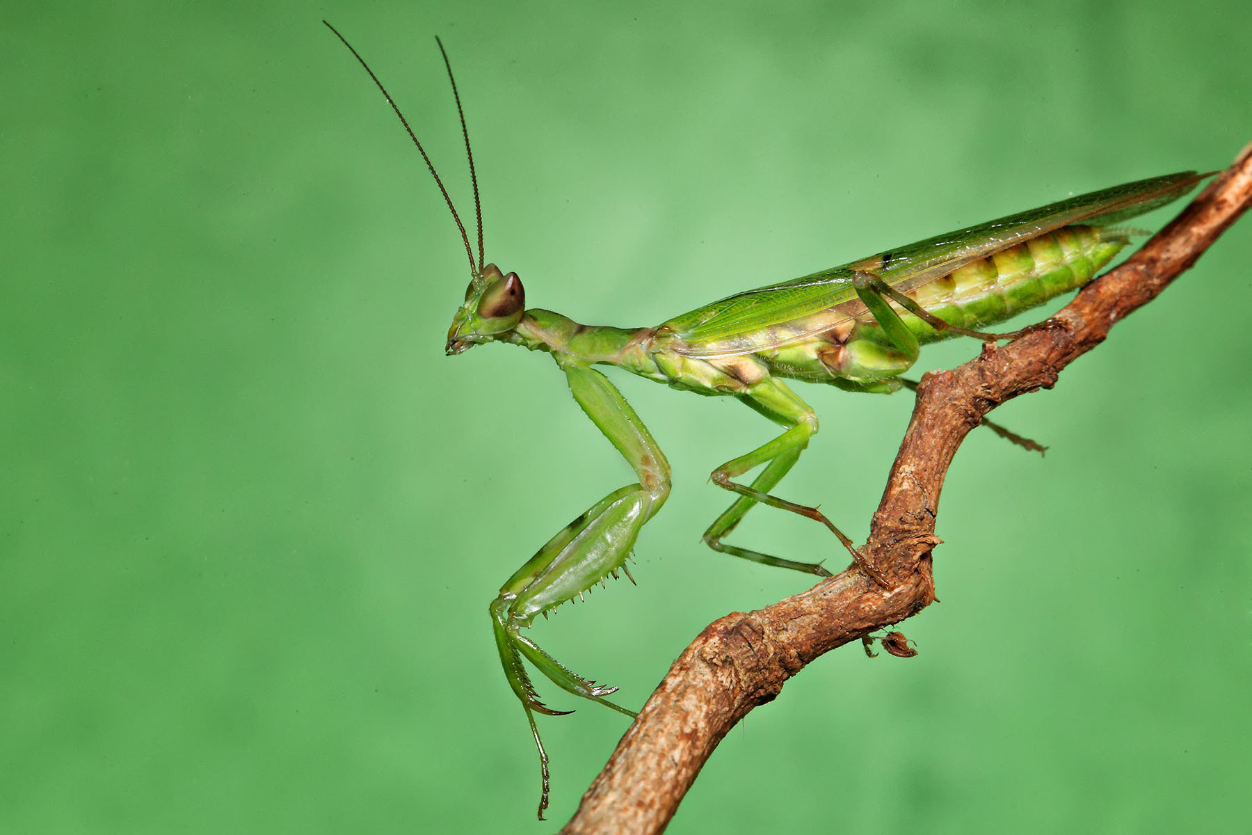 Photograph Mantis by ainx yodi on 500px
