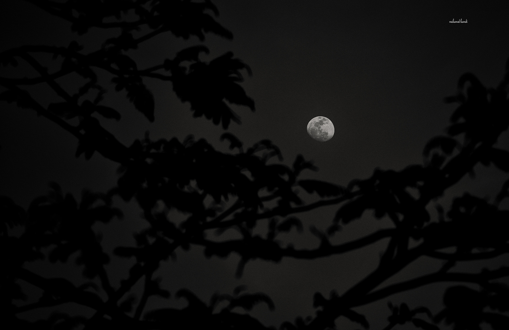 Photograph MOON  by muhammed  hamdi on 500px