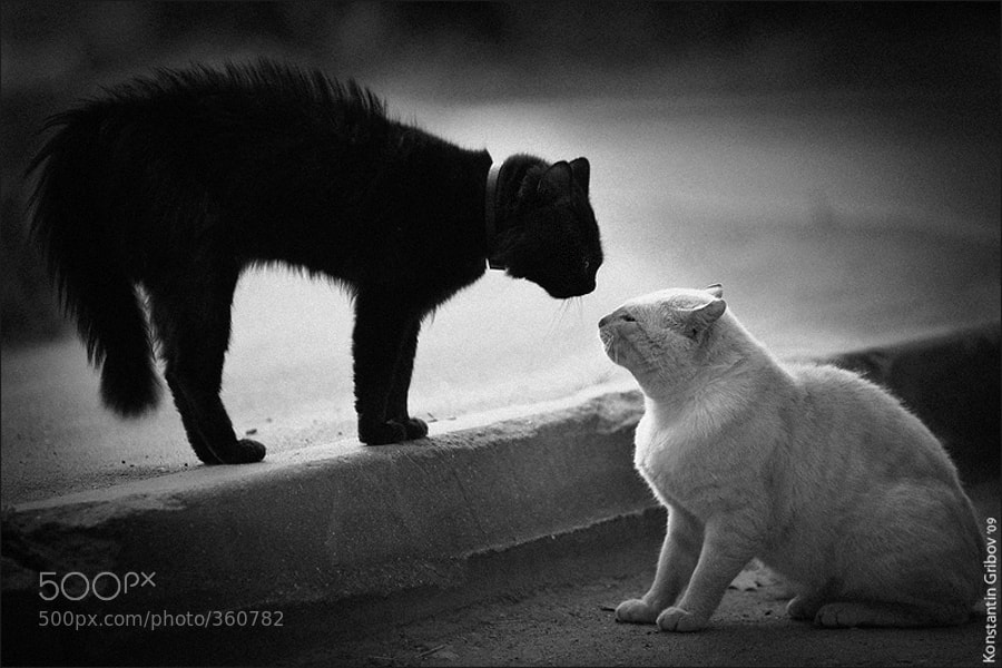 Photograph Join the Dark Side! by Konstantin Gribov on 500px
