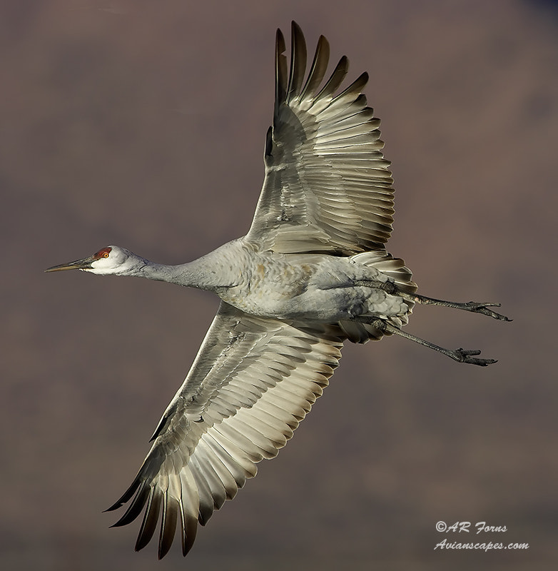 Photograph Banking Crane by Alfred Forns on 500px
