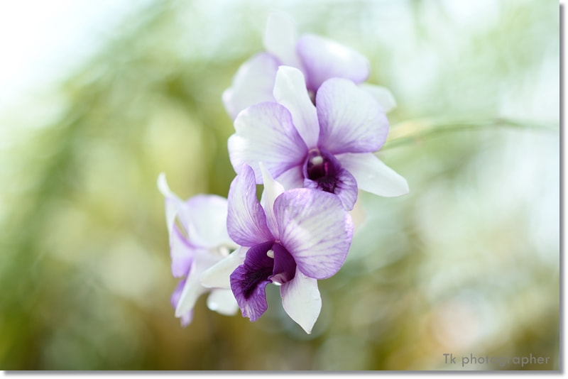 Photograph Orchid2 by T K on 500px