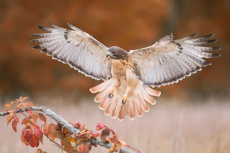 Photograph Fall Flight! by Mike  Lentz on 500px