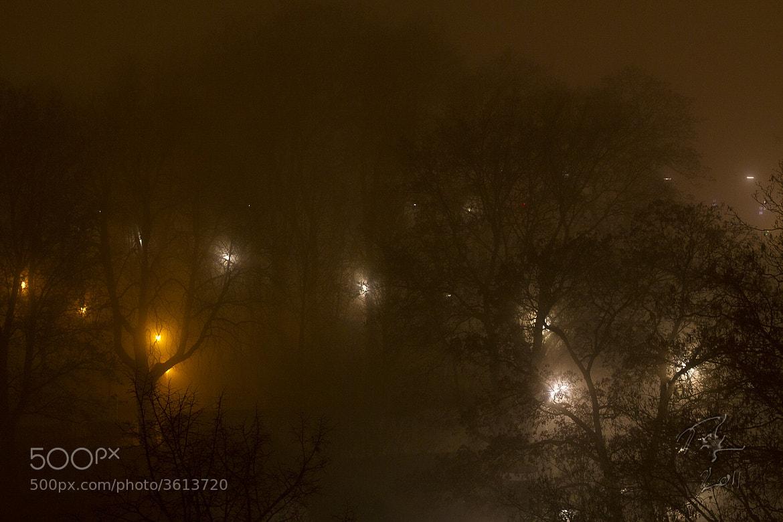 Photograph Night lights through fog by Benno Pütz on 500px