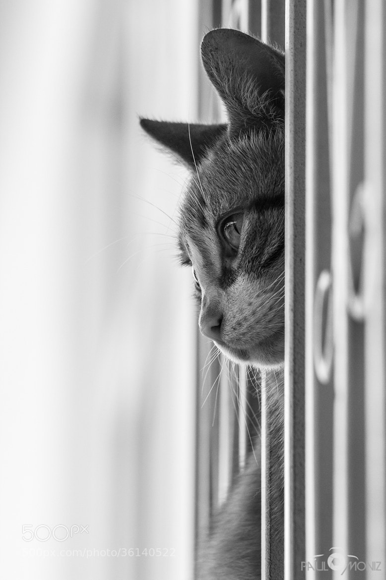 Photograph Cat at the window by Paulo Moniz on 500px