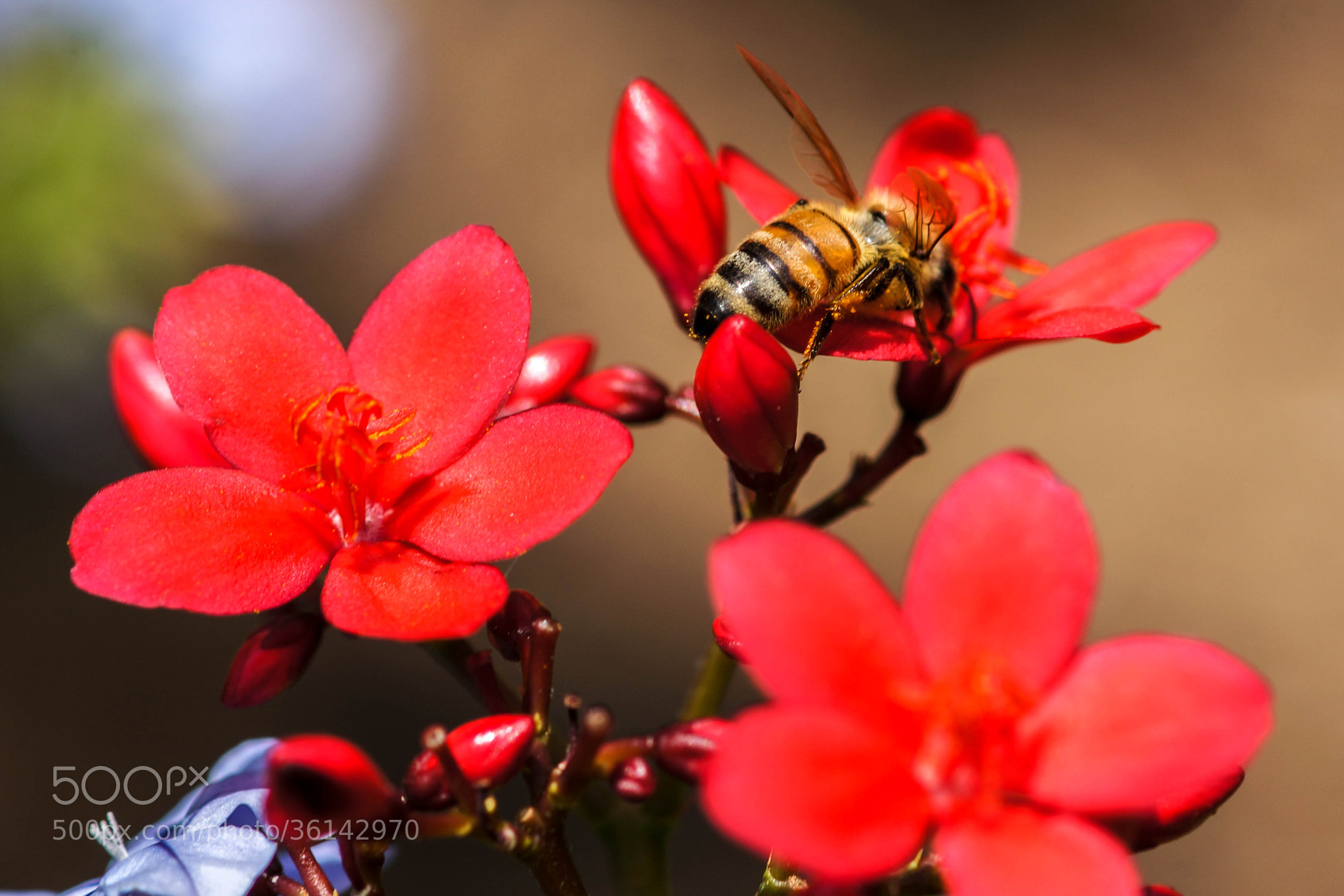 Photograph A Bee's Life by Alyssa Paraggio on 500px