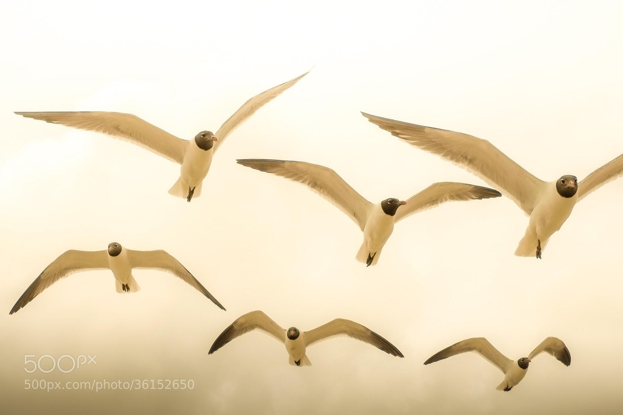 Photograph angels... by Robert van Delden on 500px