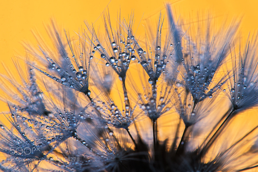 Photograph morning dew by LucVanDeWeghe on 500px