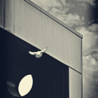 ...white doves turn into clouds...is that simple ;-)
