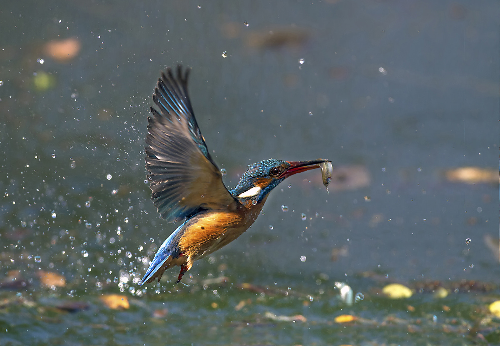Photograph Lunch flying by Marco Redaelli on 500px
