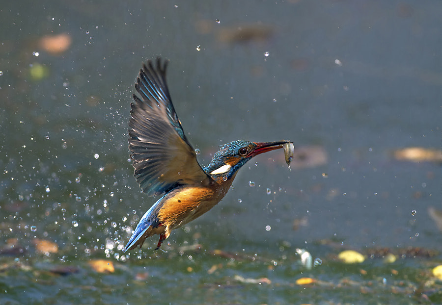 Lunch flying by Marco Redaelli on 500px.com