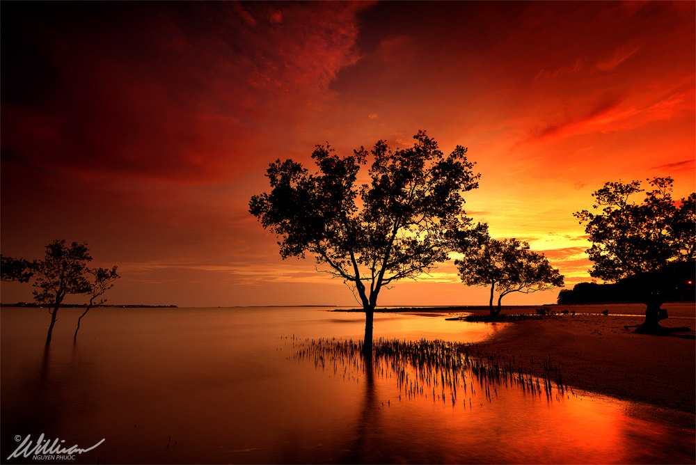 Photograph Tranquility by William Nguyen-Phuoc on 500px