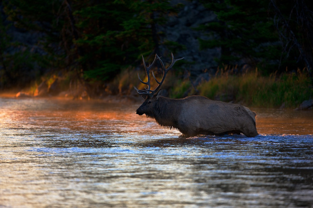 Photograph The Crossing by Buck Shreck on 500px