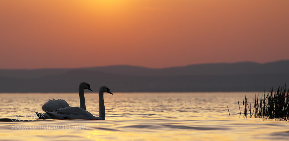 Photograph Lake Balaton by Hencz Judit on 500px
