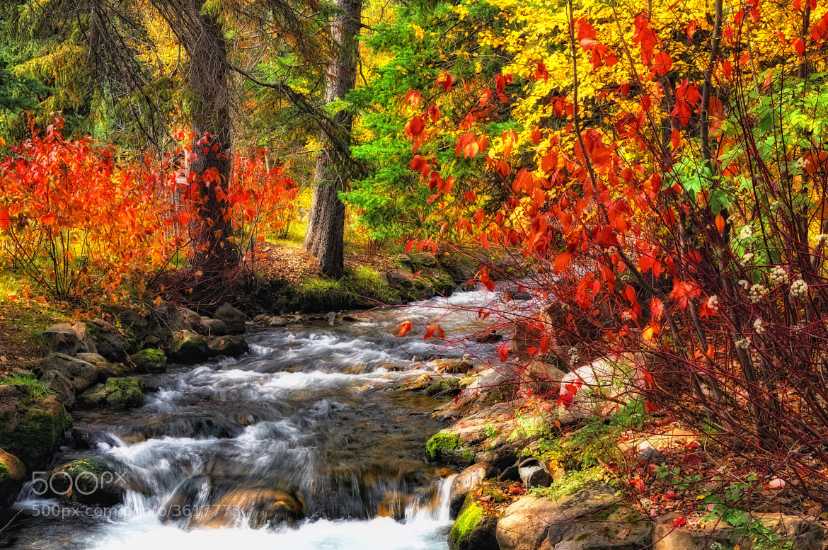 Photograph A Stream in Autumn by Mark Stevens on 500px