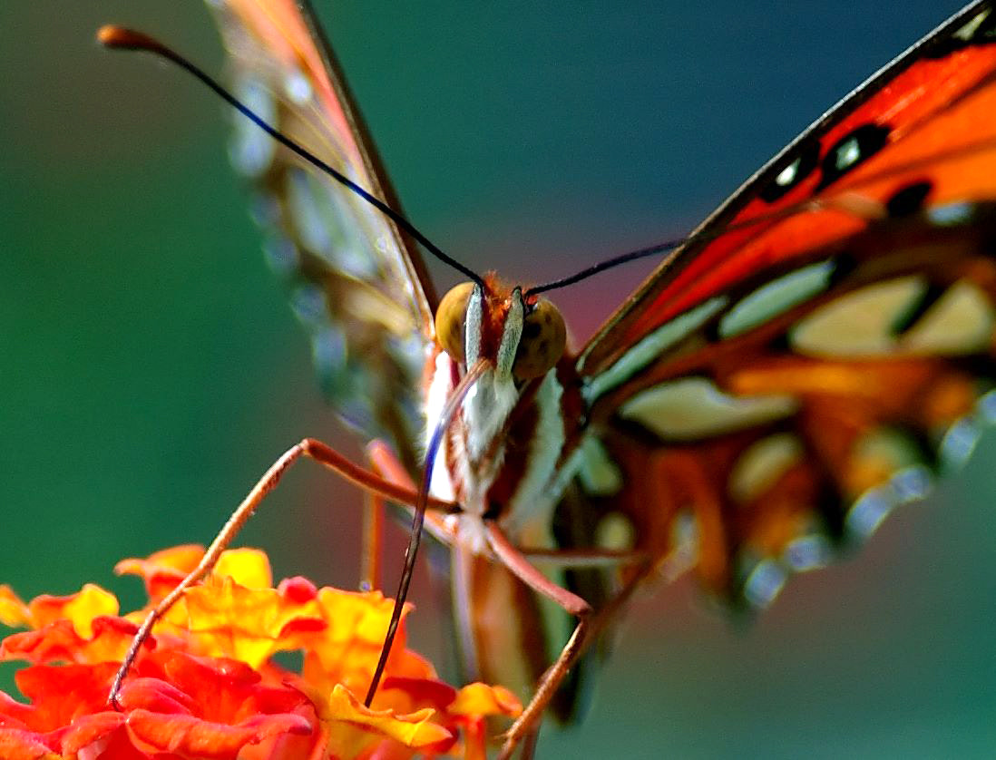 Photograph gulf fritillary by Boondock Studios on 500px