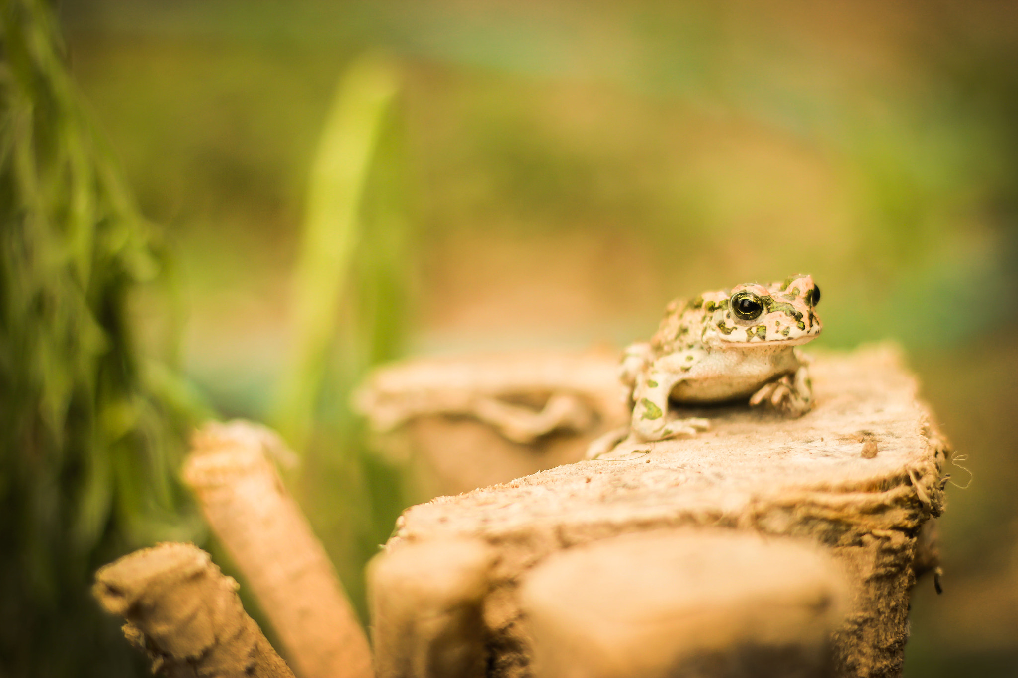 Photograph Frog !  by Qusay Abo Baker on 500px