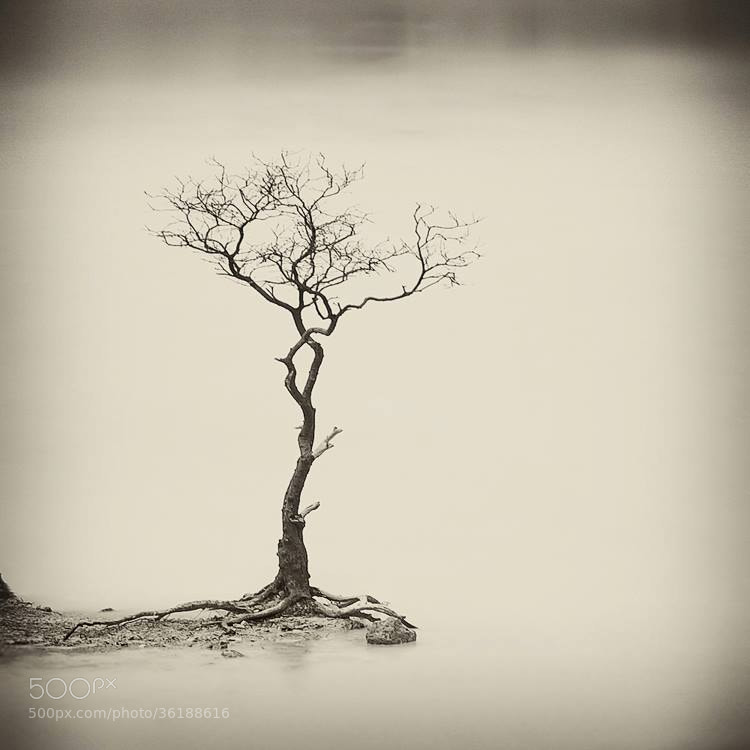 Photograph Sparse  by Hengki Koentjoro on 500px