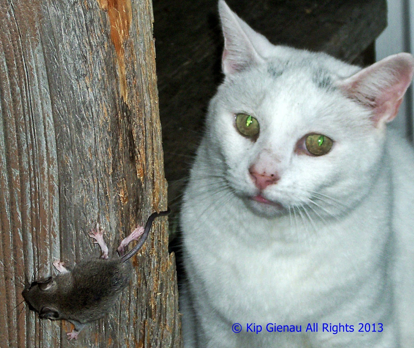 Photograph Cat & Mouse by Kip Gienau on 500px