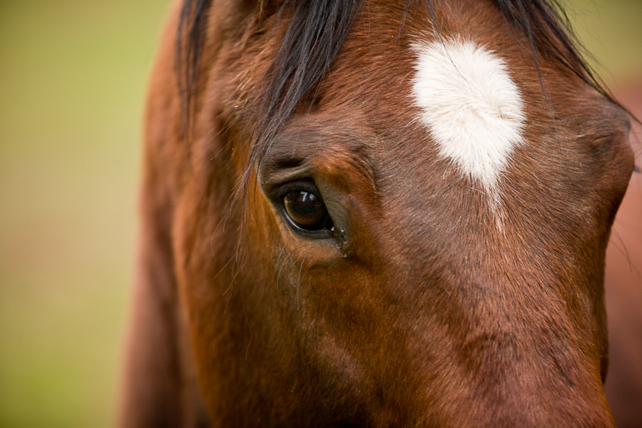 Photograph Horses's Eye by Ernesto Del Aguila III on 500px