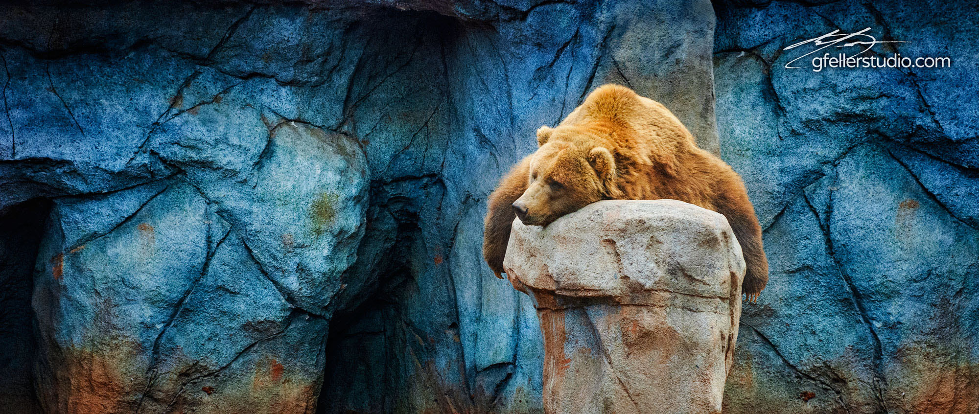 Photograph Laid backed Grizzly Bear by Erick Gfeller on 500px