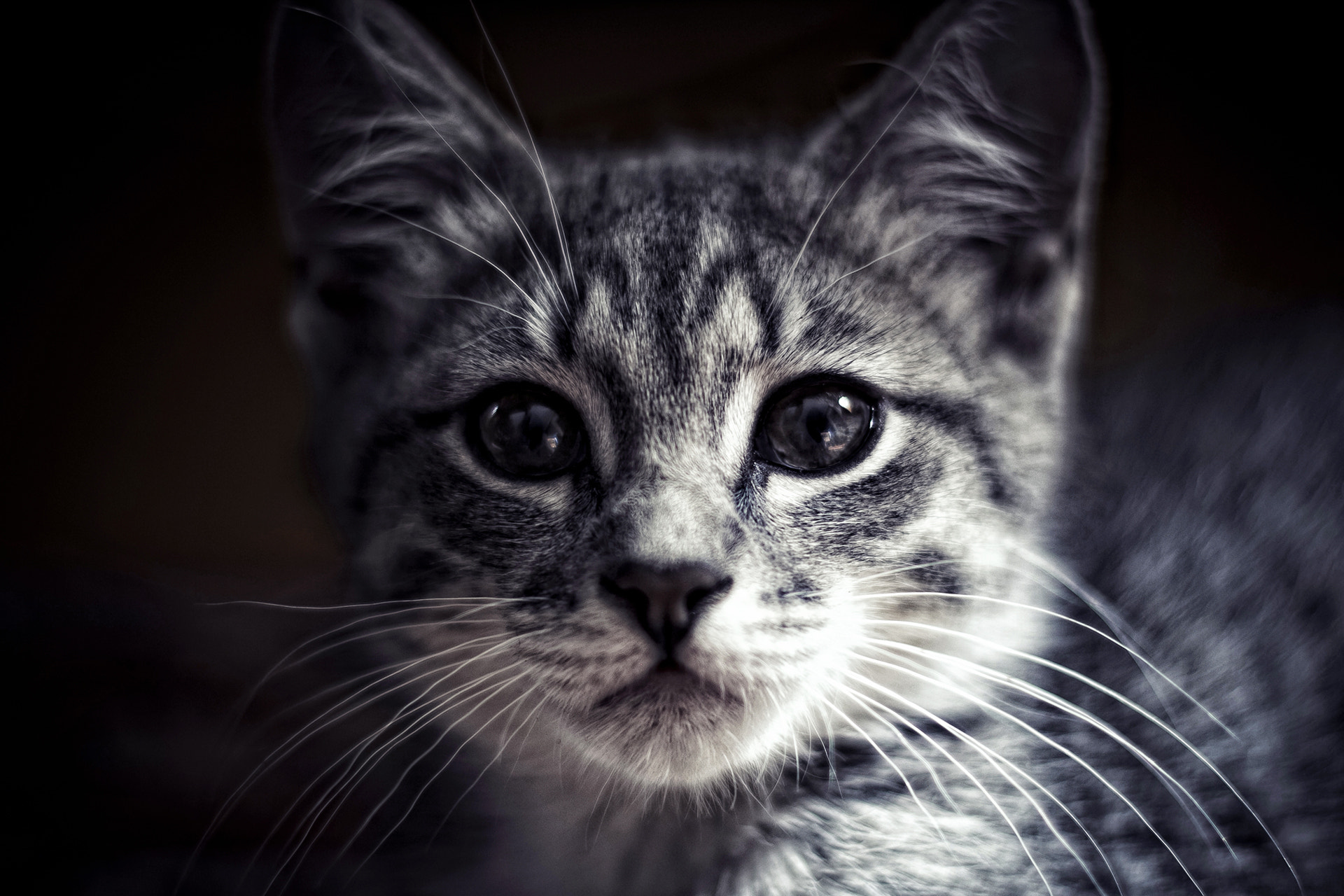 Photograph Cat by Andrey PospeloV on 500px