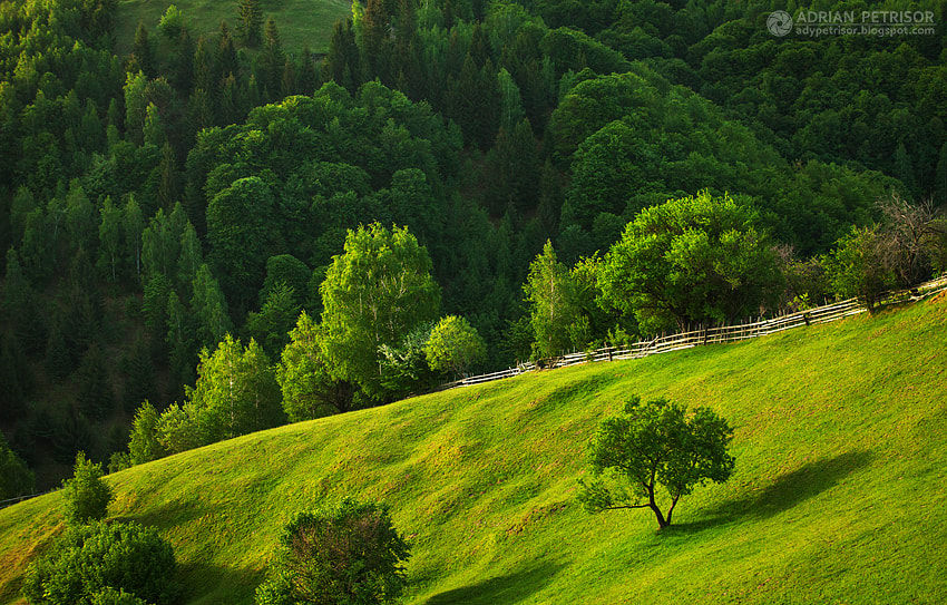 Photograph Green day by Adrian Petrisor on 500px