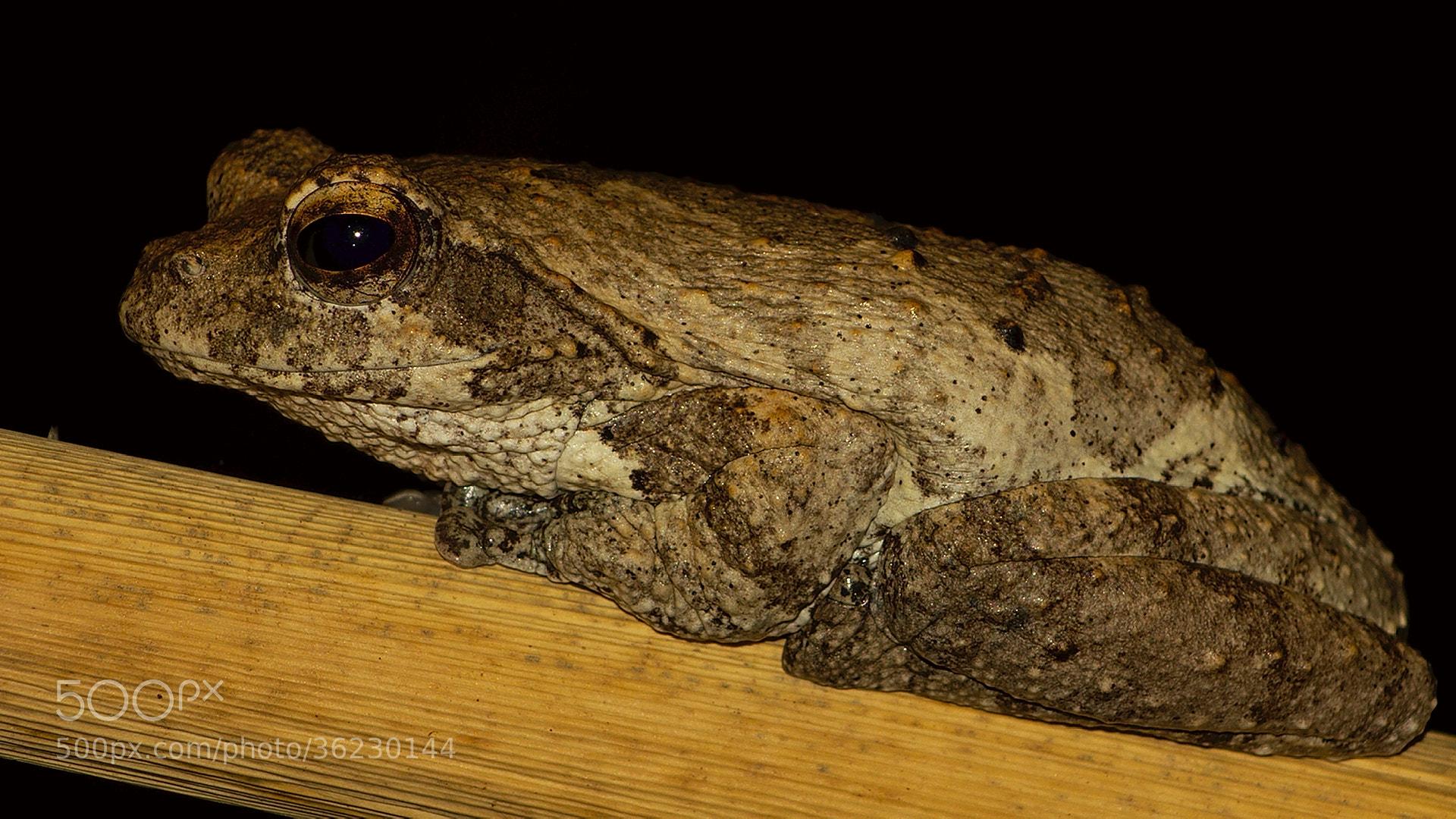 Photograph Foam nesting frog by Mareko Marciniak on 500px