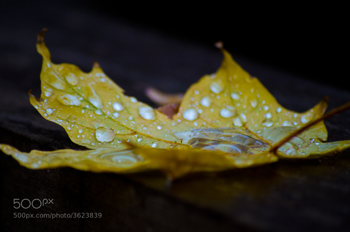 Photograph Leaf 7 by Darrin Snyder on 500px