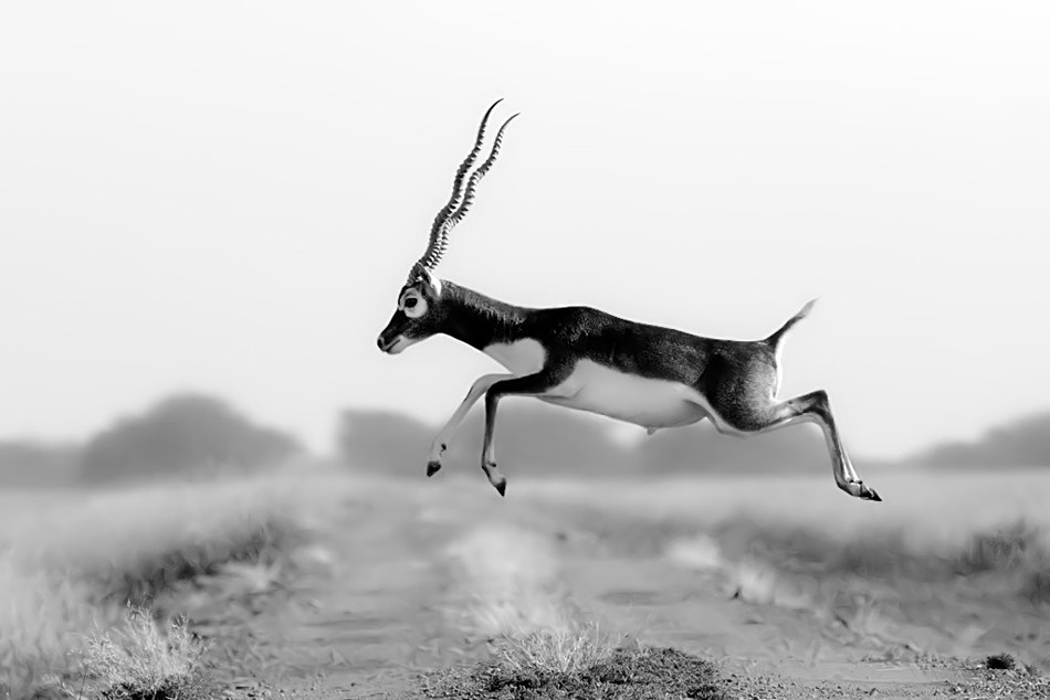 Photograph Caught in the Act by Nitin  Prabhudesai on 500px