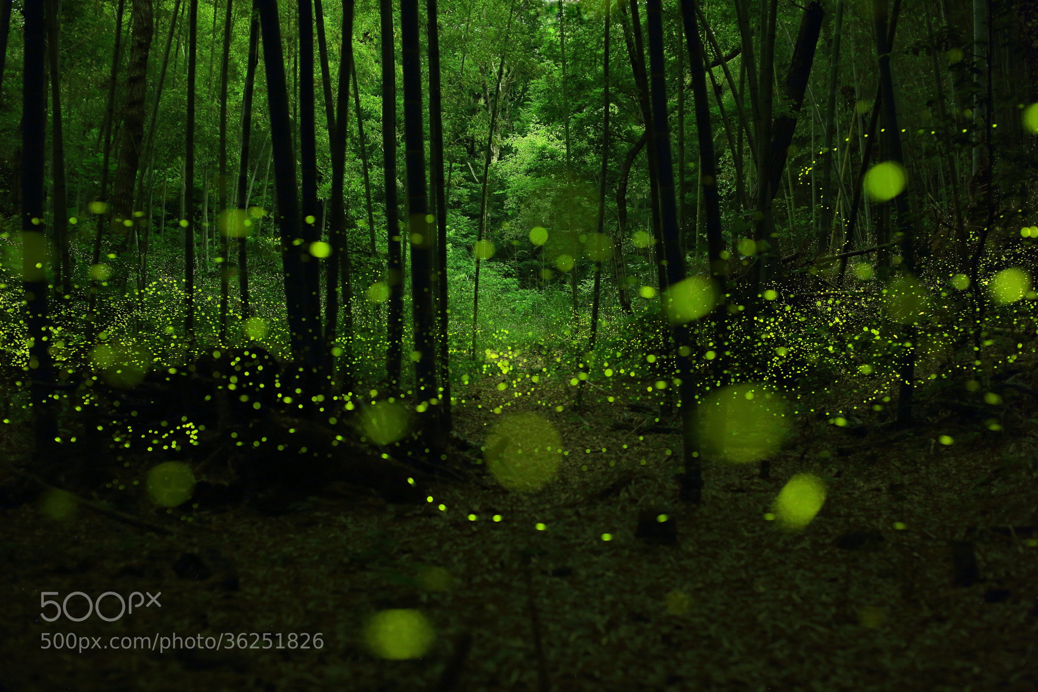 Photograph Wild Dance of Golden Fairies by yume . on 500px