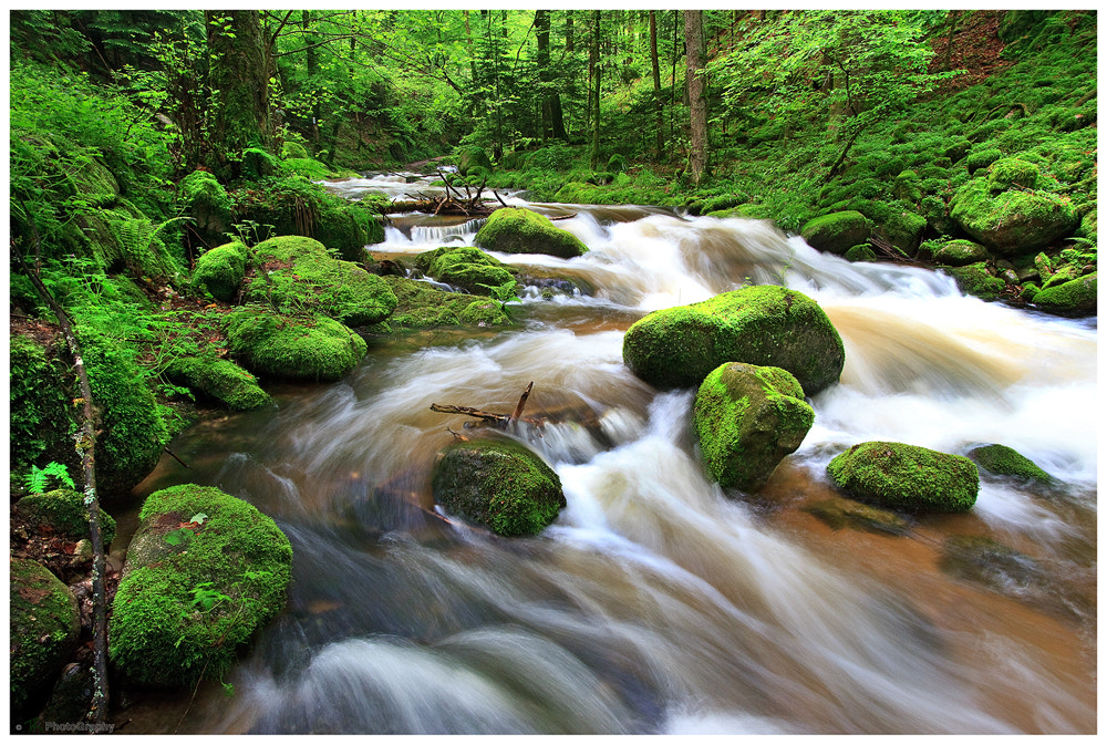 Photograph Greenwood by Tobi K on 500px