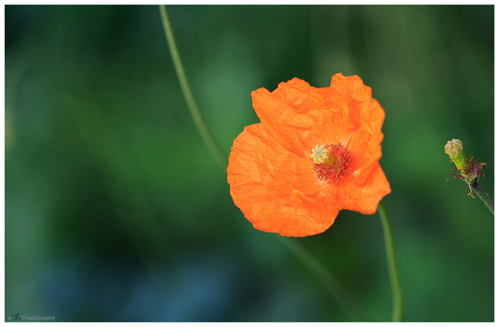 Photograph Gentle Orange by Tobi K on 500px