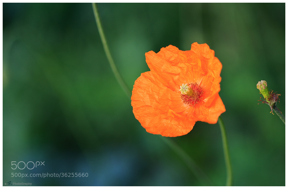 Photograph Gentle Orange by Tobi K on 500px