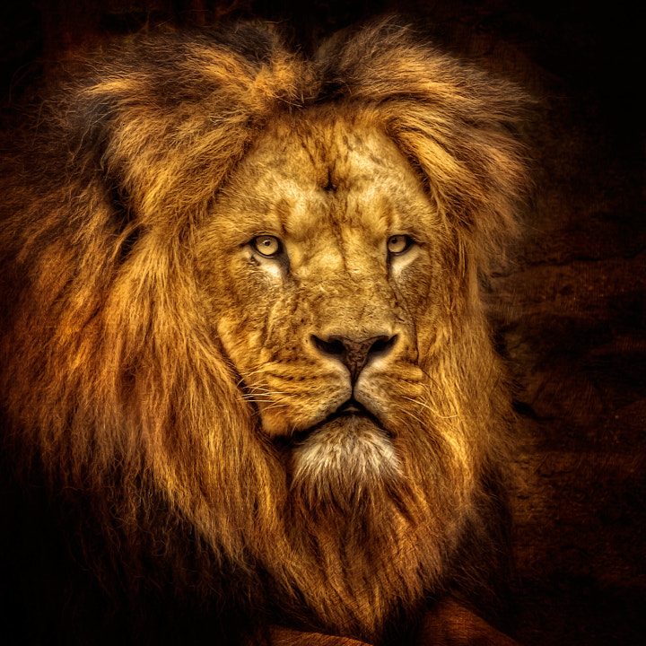 Photograph Portrait of a King by Iván Maigua on 500px