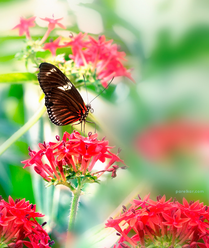 Photograph Butterfly Jungle by Milind Parelkar on 500px