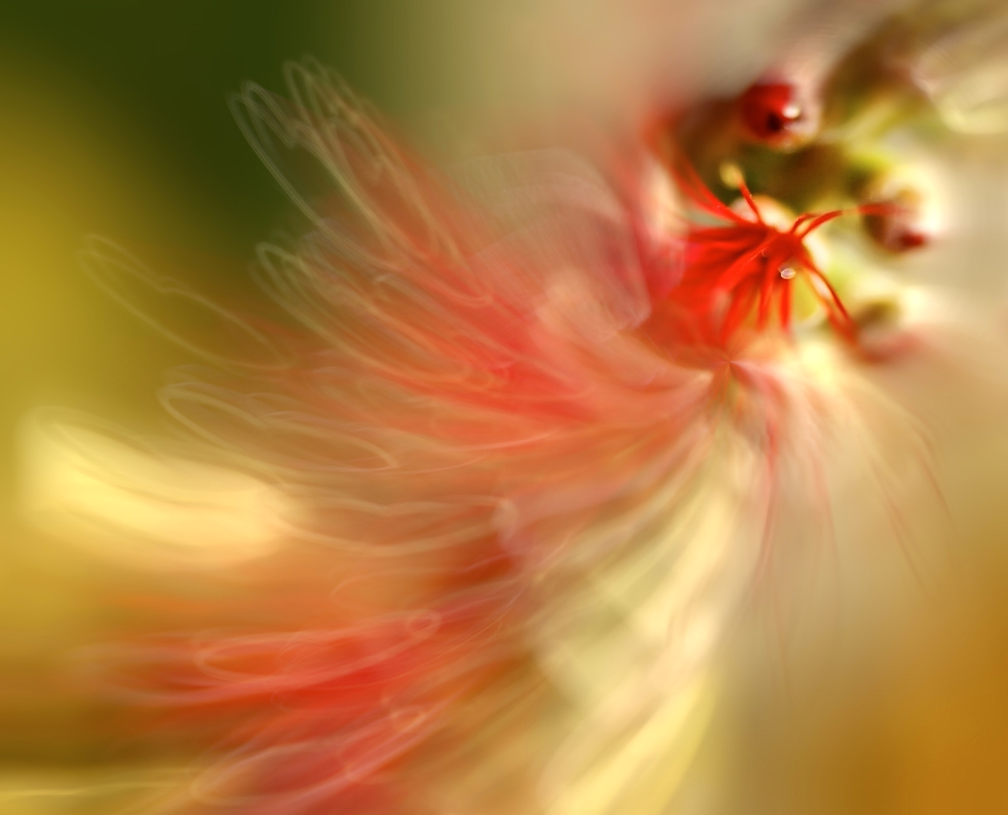 Photograph Abstract Flower by Josep Sumalla on 500px