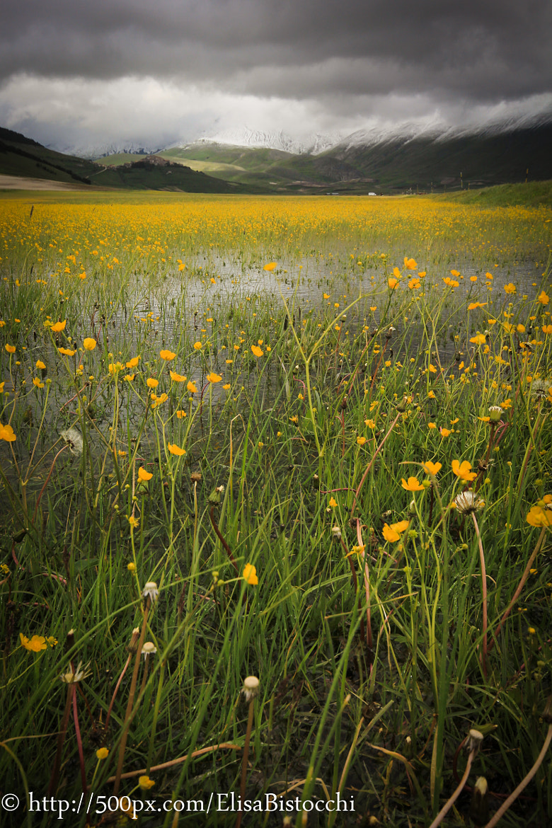 Photograph Flowers in Castelluccio di Norcia by Elisa Bistocchi on 500px