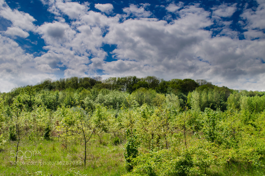 Photograph green and blue by Gunter Werner on 500px