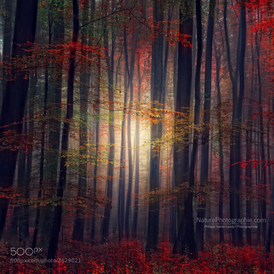 Photograph Last Glance of Fall by Philippe Sainte-Laudy on 500px