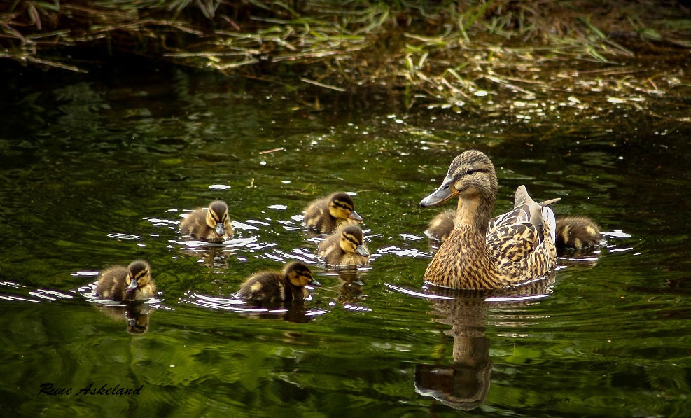 Photograph Happy family by Rune Askeland on 500px