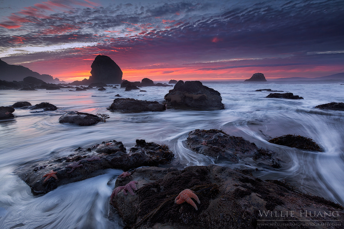Photograph The Starfish Congregation by Willie Huang on 500px