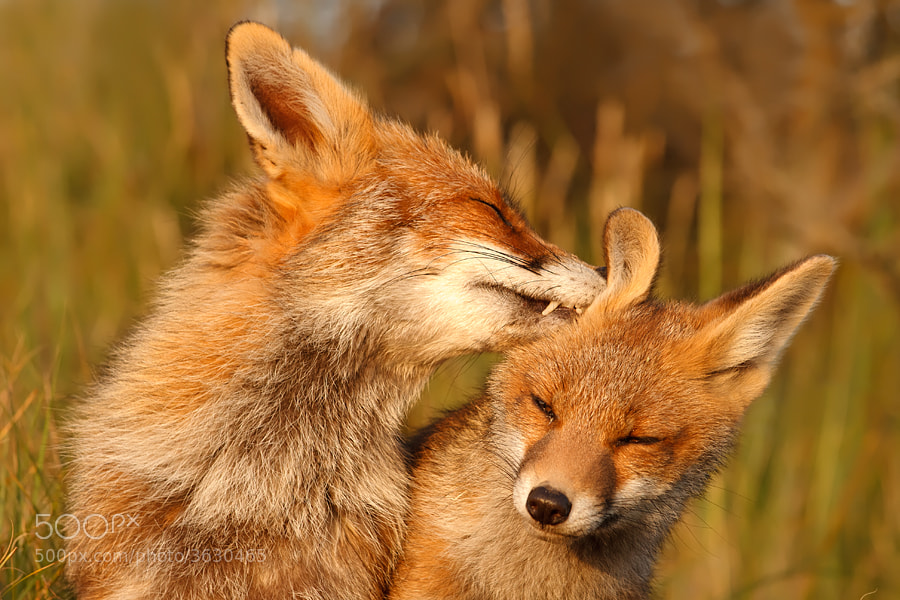 Photograph Gotta clean those Ears by Roeselien Raimond on 500px