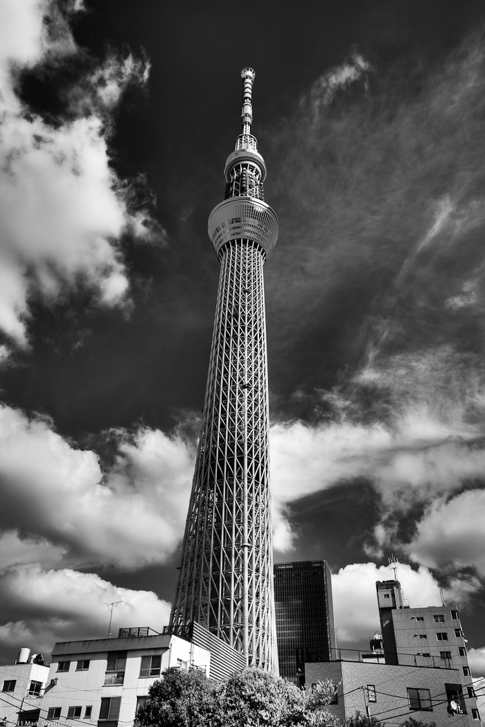 Photograph Sky Tree by Mark Wycherley on 500px
