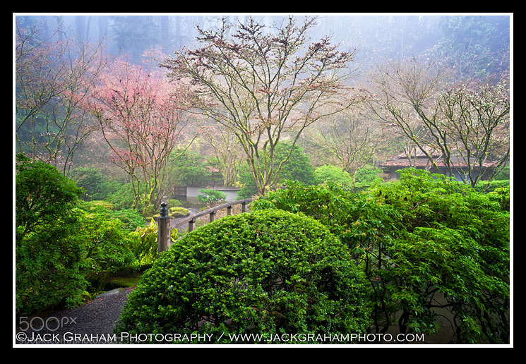 Incredible light this Am in the Portland(Oregon) Japanese Garden