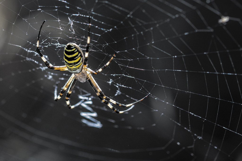 Photograph Spider by Juan Carlos Santacana on 500px