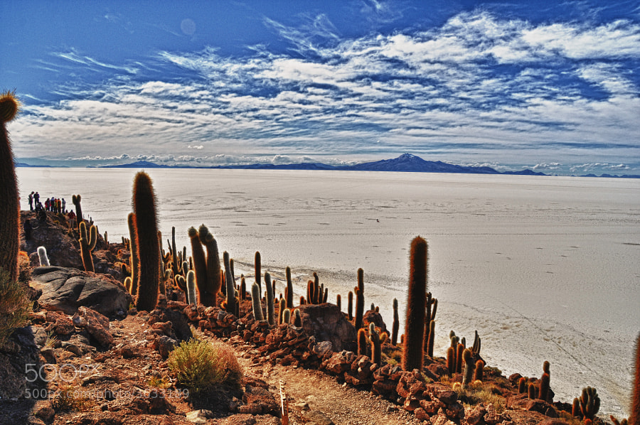 Incahuasi island (cactus island) in Salar de Uyuni, Bolivia  by Yasmine DG (Yasmine) on 500px.com