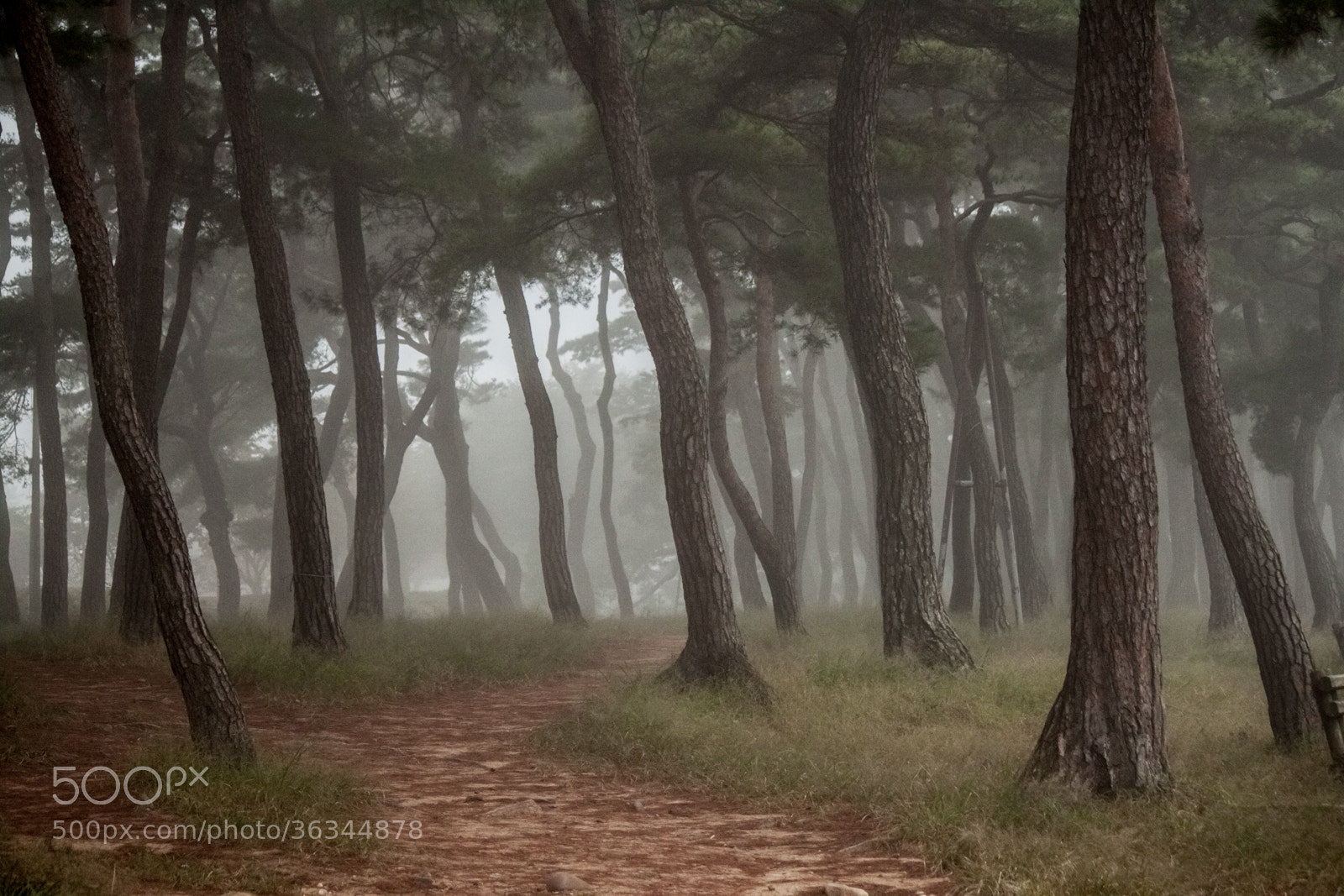 Photograph Andong Trees by Joel Benson on 500px