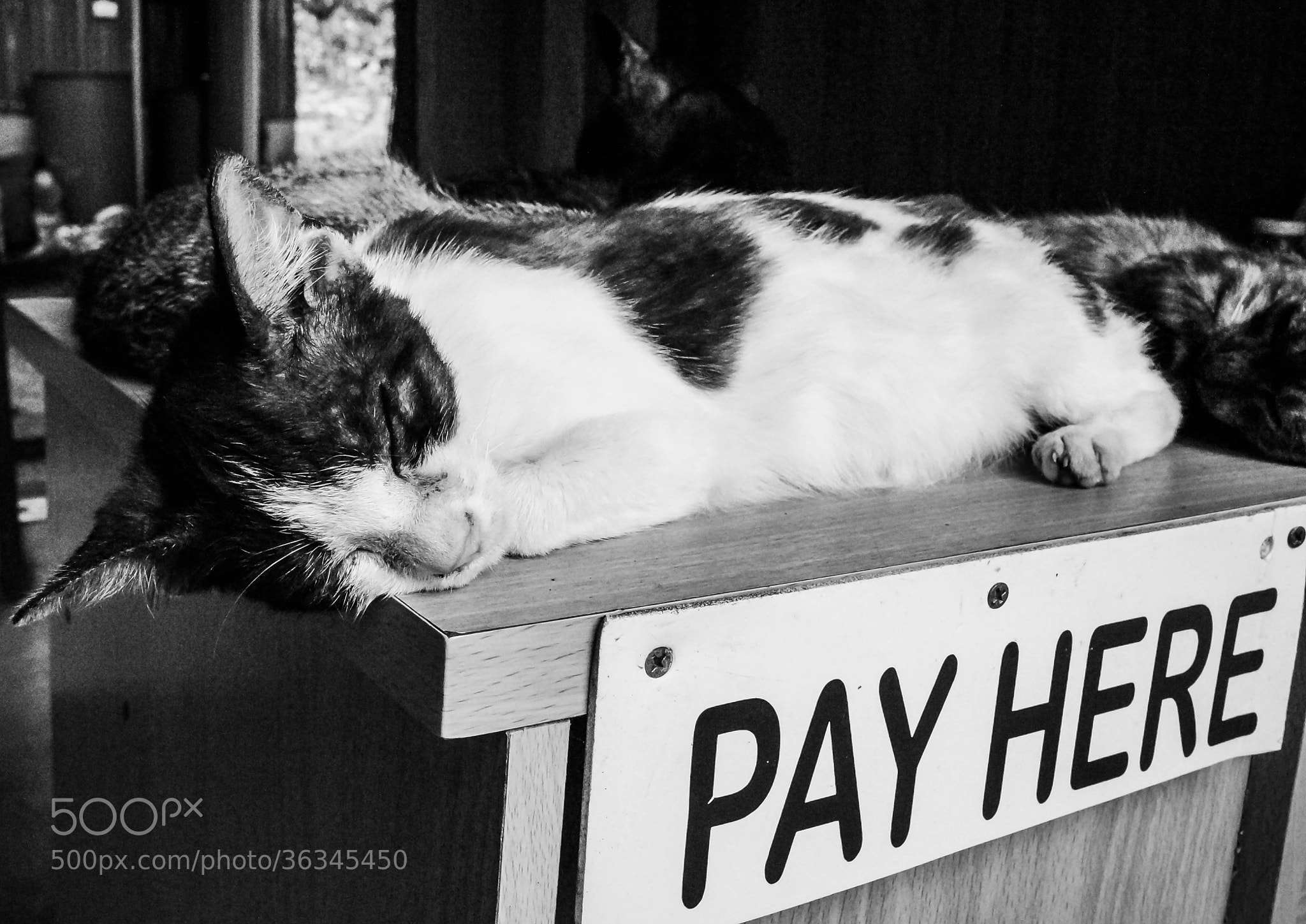 Photograph The treasurer by Shanti Hesse on 500px
