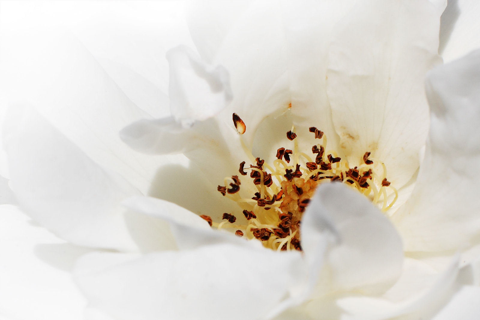 Photograph White Flower by Ewen Charlton on 500px